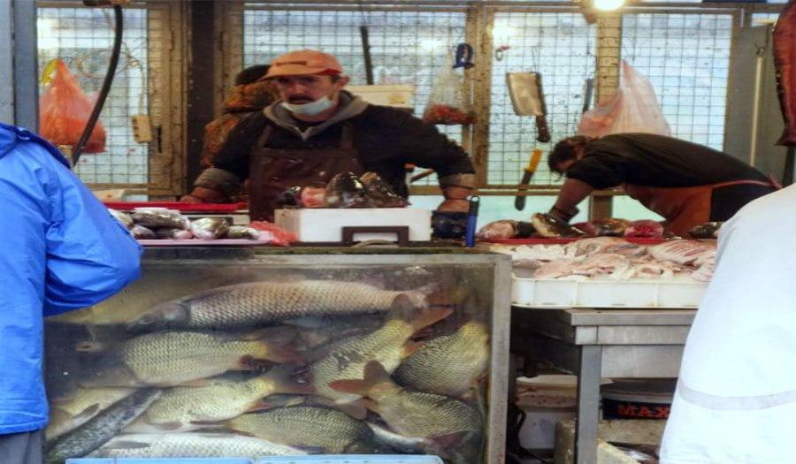 Zemun fish market
